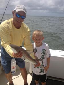 kal shark 2013