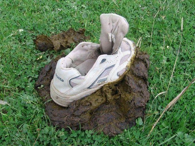 poop shoe